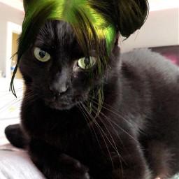 freetoedit billieeilish cat