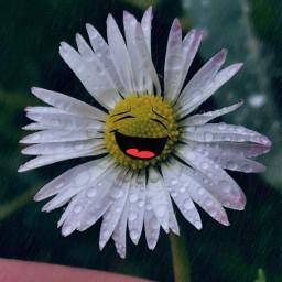 raindays daisy flower stickers texturemask freetoedit