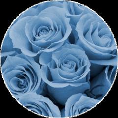 background blue babyblue roses rose freetoedit