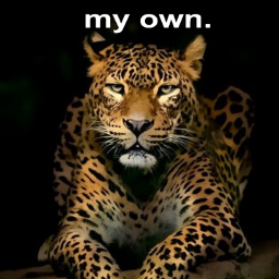 freetoedit remix strength leopards bigcats