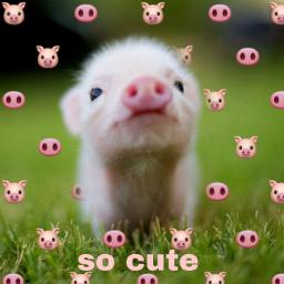 freetoedit cutie animaleye animaux cute ecemojibackgrounds emojibackgrounds