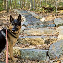 freetoedit outdoorphotography oldstairs petlove mydog