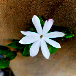 nature flowerphotography naturalbeauty holographic