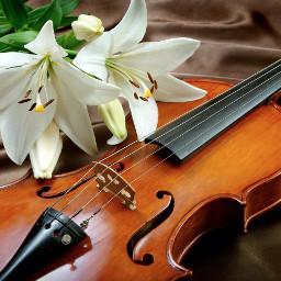 art photo flower violin freetoedit