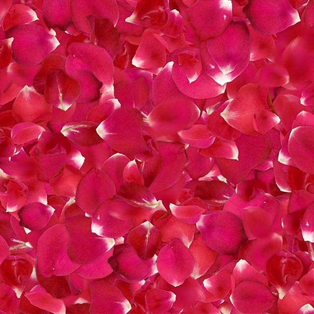 #background #petals #freetoedit