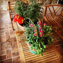 garden plants gardenplants beautiful beautifullife