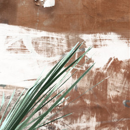 freetoedit wallpaper palmtree vintage