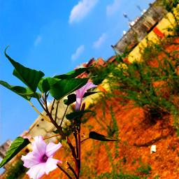 flowercrown naturebeauty flowerphotography flowersfollower
