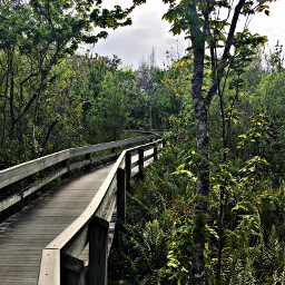 freetoedit nature wood boardwalk green