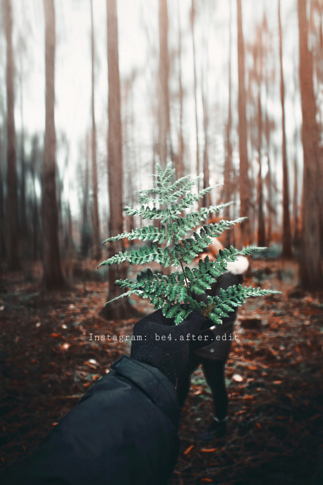 INSTAGRAM: be4.after.edit  #freetoedit #woods #instagram #photography #taptoedit #editit #picsart #freeedit #followme #snow #tree #wald