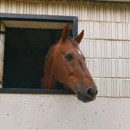 freetoedit horselove beautifulbirthmarks animaleye animaux