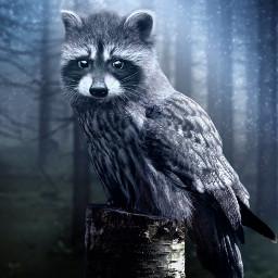 animalhybrid raccoon owl freetoedit