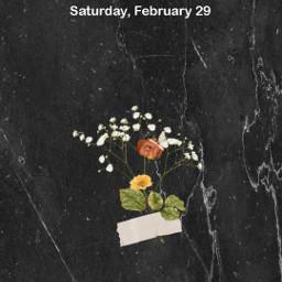 freetoedit wallpaper wallpapers wallpaperedit flowers ecphonewallpapers phonewallpapers