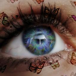 freetoedit eye butterfly
