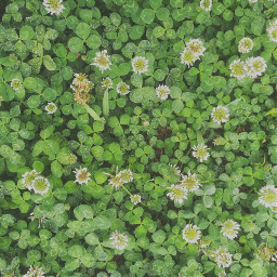 freetoedit greenaesthetic greengrass grassandflowers threeleafclower