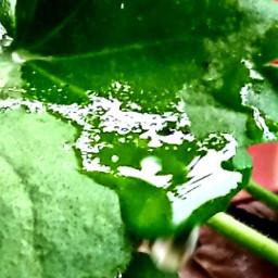 drops dropsofwater drop dropsofrain rain