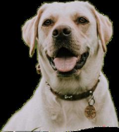 dog♡♡lover freetoedit dog