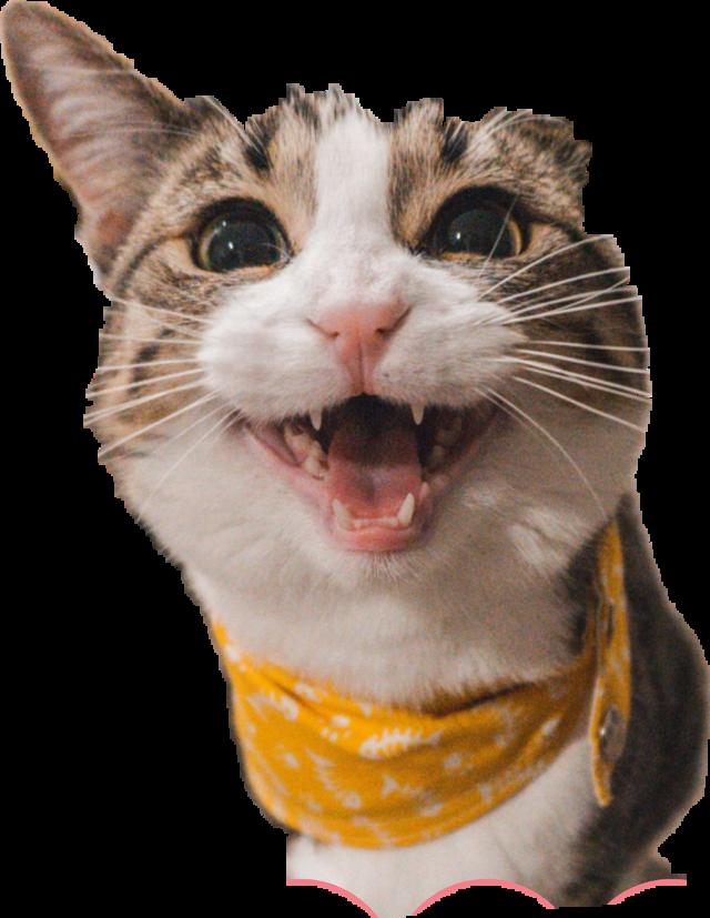 #loudcat me not a catlover .-.