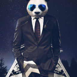 freetoedit panda animallover suit night