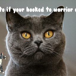 freetoedit warriorcats remixit