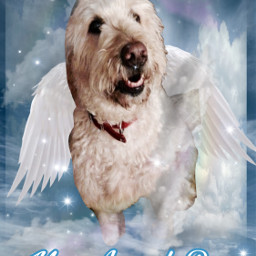 rufus puppyheaven restinparadise loveneverends myboy freetoedit phonewallpapers