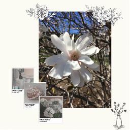 freetoedit flowerphotography flower white whiteaesthetic