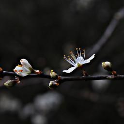 flower flowerpower blossoms springhassprung outandabout freetoedit