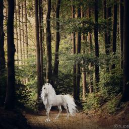 freetoedit unicornstickers