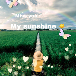 feild sunshine missingyou interesting art freetoedit ircstopandstare stopandstare