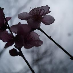 flower love nature