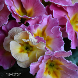 flowers springishere nature march