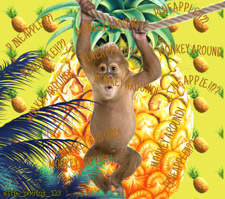 #monkeys