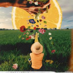 freetoedit myedit flowers sun lemon ircstopandstare