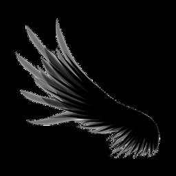 крыло крылочёрное freetoedit