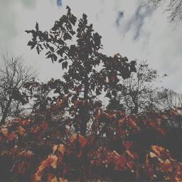 aesthetic aesthetics tree fall freetoedit
