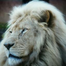 e-go lion nature petsandanimal picsoftheday