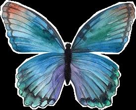 butterfly butterflies rainbow monarch aesthetic freetoedit