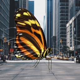 freetoedit bigbutterfly polishgirl❤ wyzwanie biganimals ecgiantanimals giantanimals