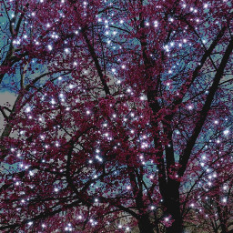 freetoedit tree pink centralpark newyorkcity