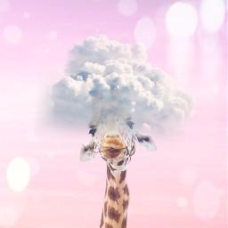 freetoedit giraffe cute pink headintheclouds srcheadintheclouds