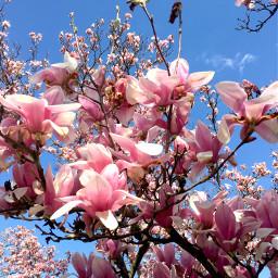 freetoedit pcspringinyourcity springinyourcity spring photography