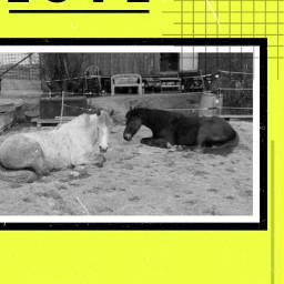 love theonesyoulove pony freetoedit