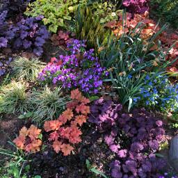 spring springishere flowers blumen fr pcspringinyourcity