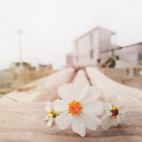 #freetoedit,#pcspringinyourcity,#springinyourcity,#spring,#photography