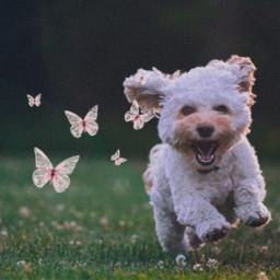 freetoedit srcpinkbutterflies pinkbutterflies createfromhome stayinspired