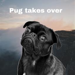 freetoedit pug niceview