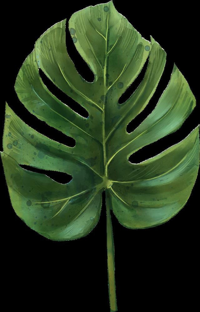 #leaves #green #трава #листья #tropical