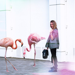 freetoedit птицы фламинго засвет эффект