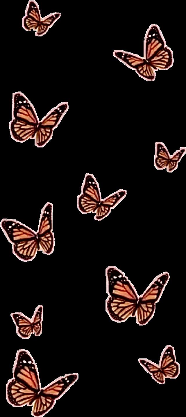 #asthetic #butterflies #freetoedit