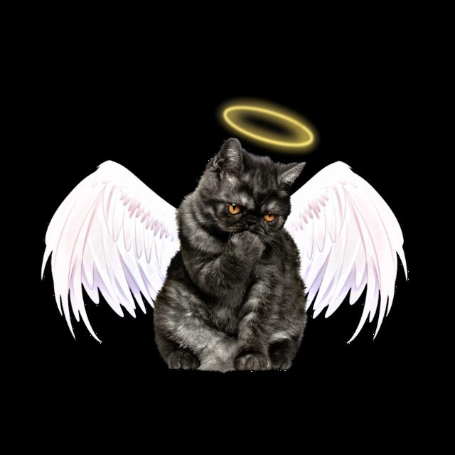 #anglecat